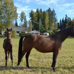 Miss Magic Heart och Mr Magic Contact